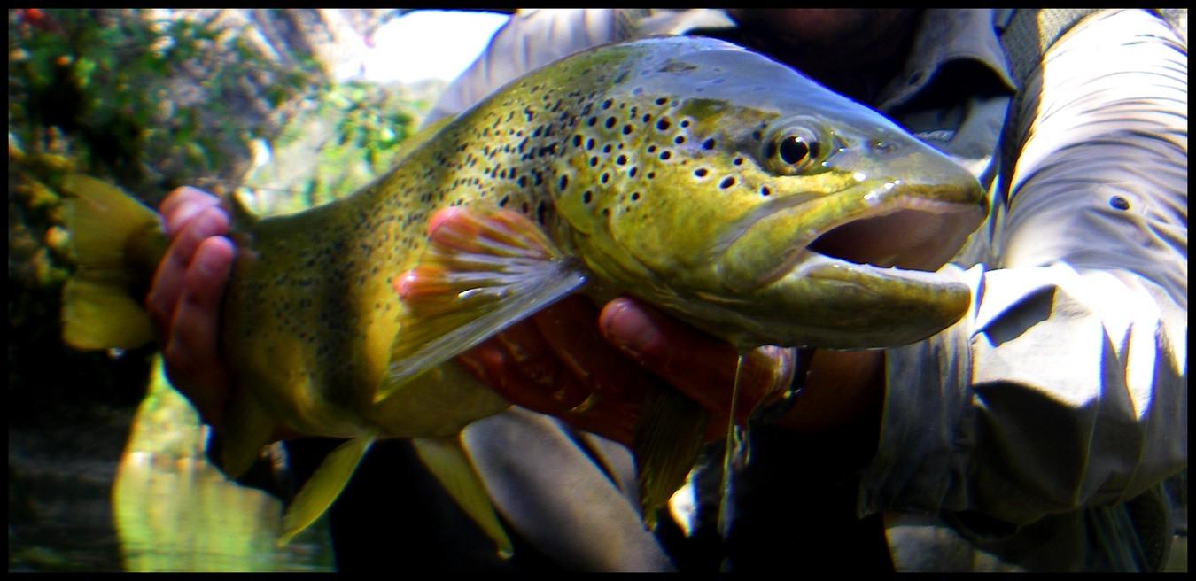 Oparych sur le crochet pour la pêche